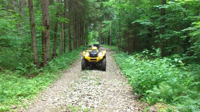 Каменистая дорога через лес