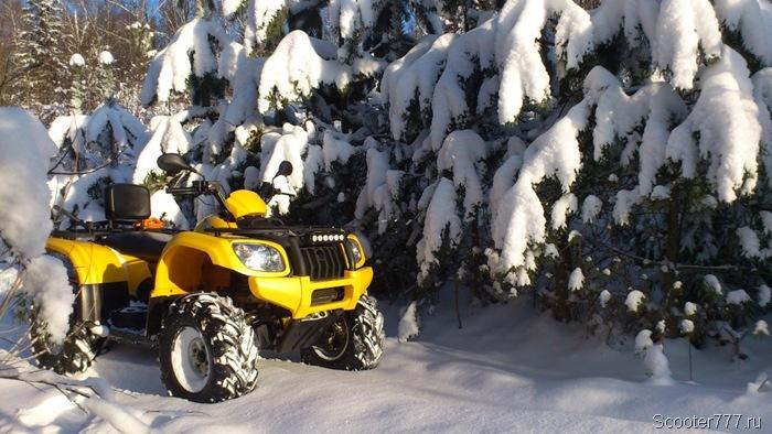 Еловые лапы покрылись снегом