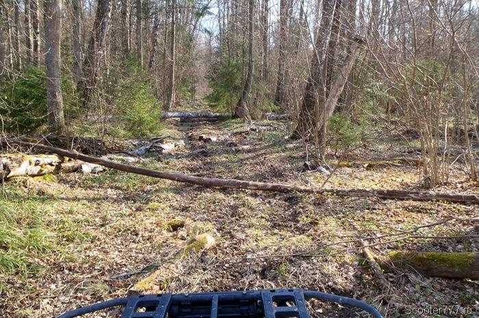 Заваленная деревьями дорога