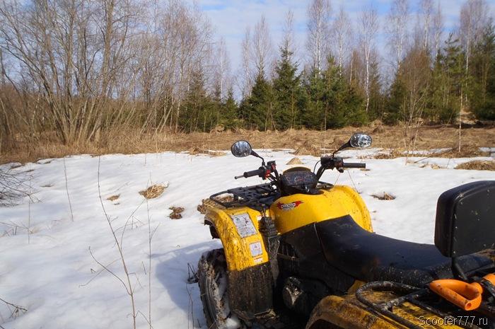 На опушке леса обнаружен снег