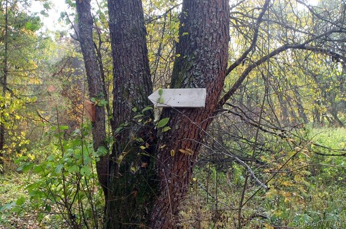 Указатель в лесу