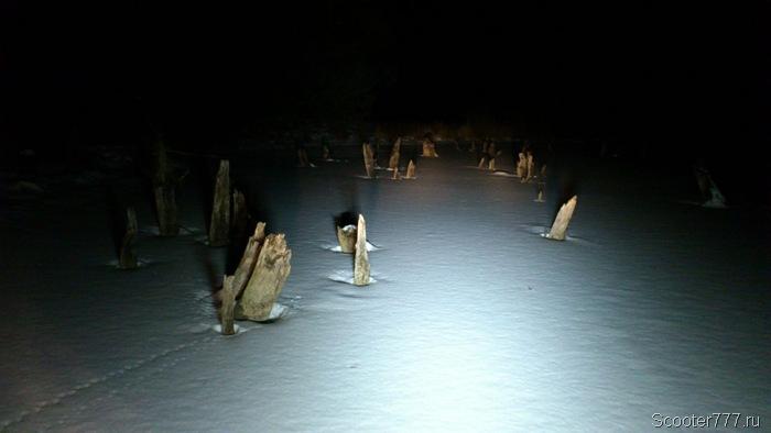 Пеньки на пруду