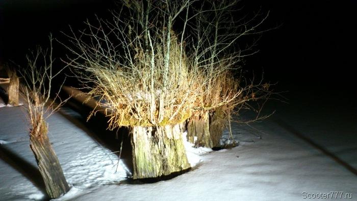 Растения пустили корни
