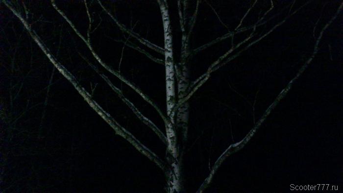 Стрёмная берёза