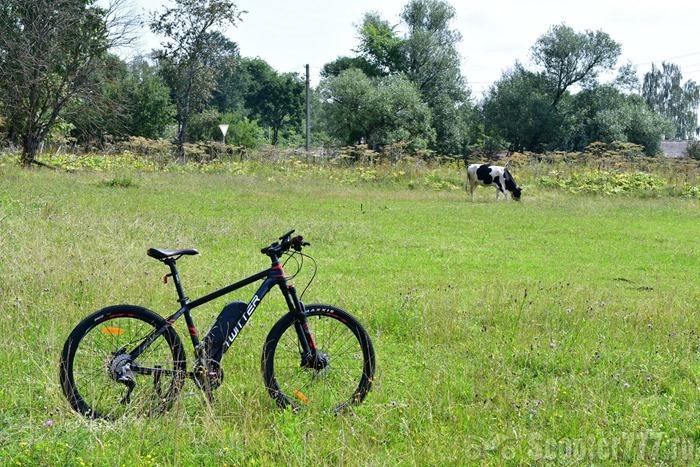 Велосипед и корова